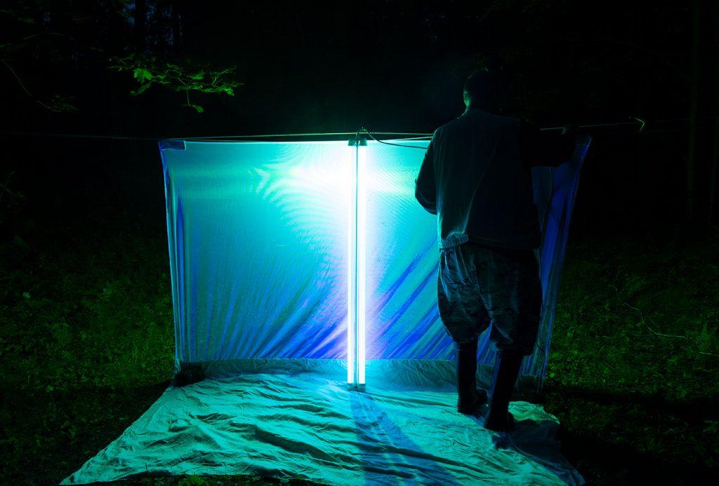 mies virittää pimeässä perhosten houkutteluun tarkoitettua valotelttaa. Uv-valo näyttää siniseltä